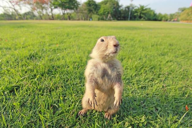 Cão da pradaria na paisagem natural