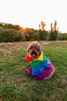 Cão de água marrom espanhol engraçado bonito com uma bandeira alegre do arco-íris colorido. conceito de festividade do orgulho. estilo de vida ao ar livre
