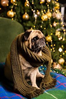 Cão de alto ângulo com cachecol ao lado da árvore de natal