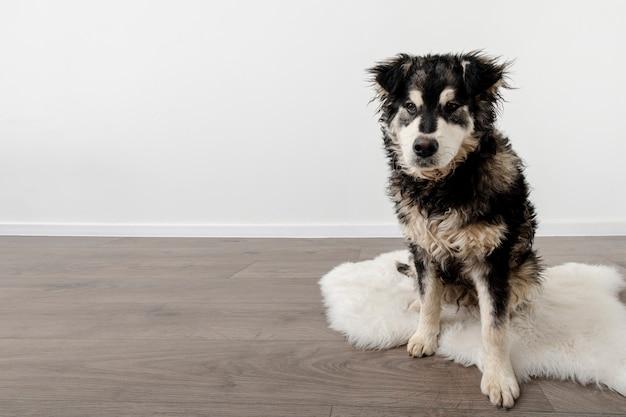Cão de ângulo alto em casa com cópia-espaço