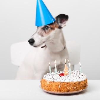 Cão de aniversário com bolo e velas