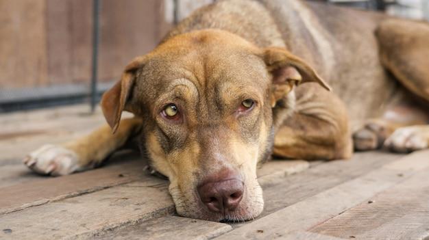 Cão de brown que senta-se em um balcão que espera seu chefe.