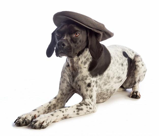 Cão de caça preto e branco com tampa