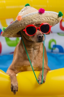 Cão de chapéu e óculos em uma piscina inflável brilhante