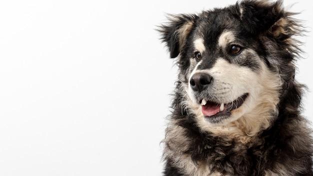 Cão de cópia-espaço, olhando para longe