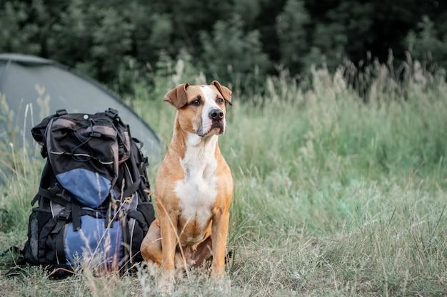 Cão de estimação adorável senta-se perto de uma mochila grande caminhada na frente de uma tenda na natureza