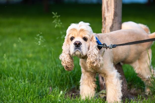 Cão de estimação com coleira