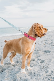 Cão de estimação fofo caminhando na praia de areia conceito de passatempo divertido com cachorro no verão