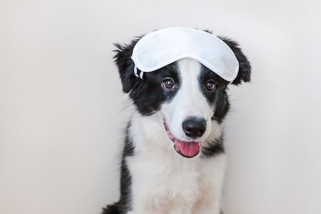 Cão de filhote de cachorro smilling bonito engraçado border collie com máscara de olho para dormir isolada no fundo branco