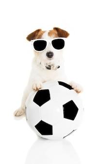 Cão de jack russell que joga com uma esfera de futebol. isolado