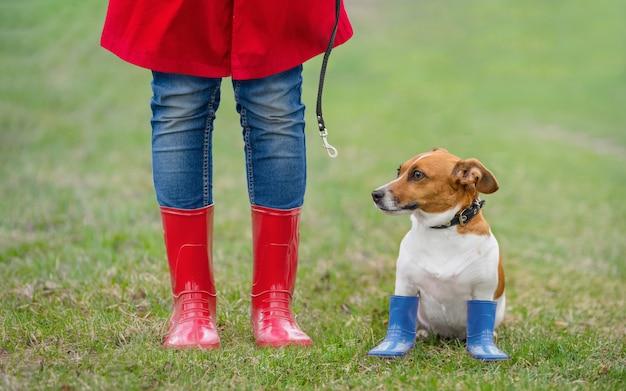 Cão de jack russell que senta-se ao lado de uma menina nas calças de brim e em botas de chuva vermelhas no parque da mola.