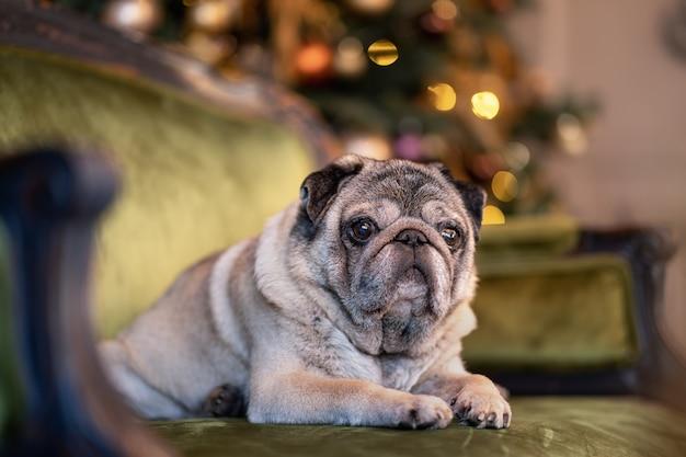 Cão de natal com guirlanda, enfeites e bolas na cama nas férias de natal