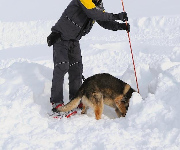 Cão de pastor alemão cão de resgate na neve