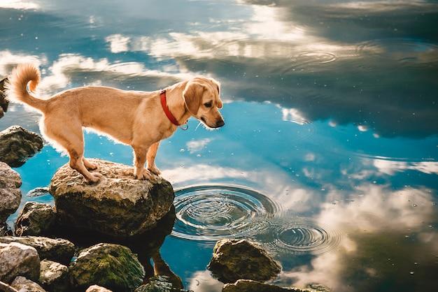 Cão de pé junto à água