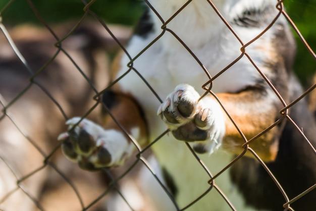 Cão de raça desconhecida atrás das grades em um abrigo