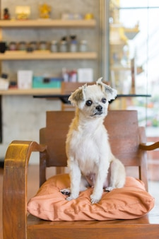 Cão de raça misturada tão bonito no café procurando algo