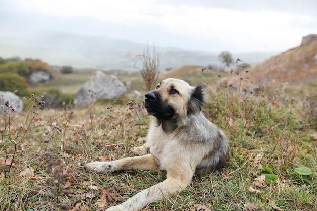 Cão de raça pura ao ar livre deitado na grama, viajando amizade