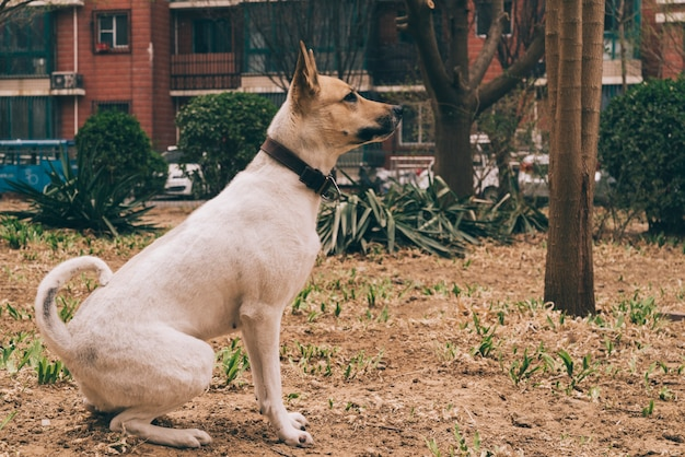 Cão de raça pura na caminhada na cidade