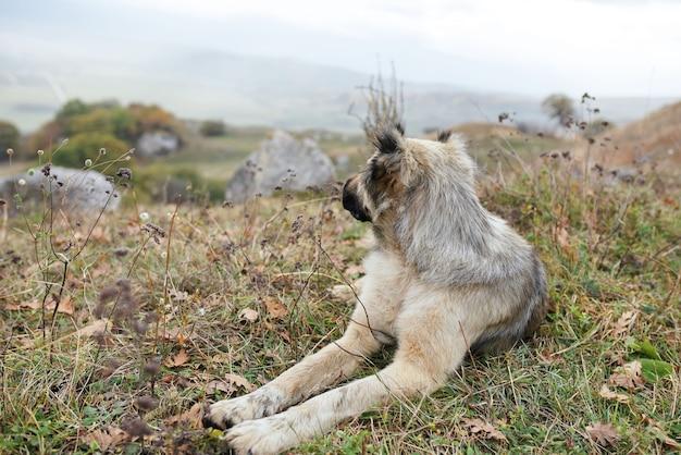 Cão de raça pura nas montanhas, natureza, viagens, paisagem, férias
