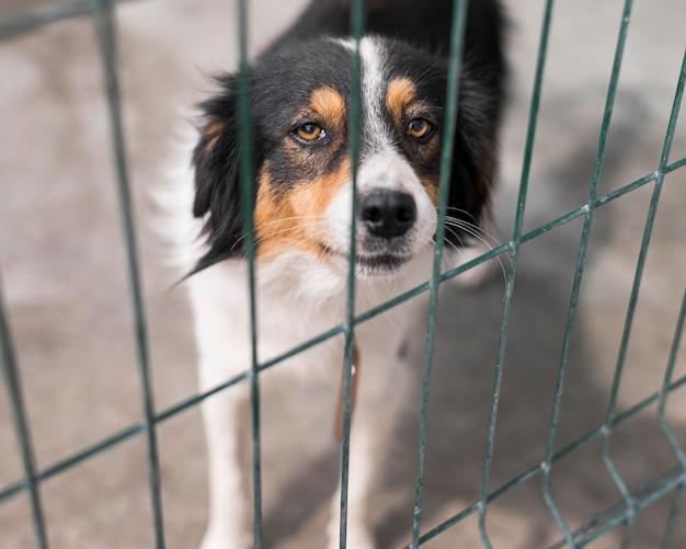 Cão de resgate triste atrás da cerca em abrigo de adoção