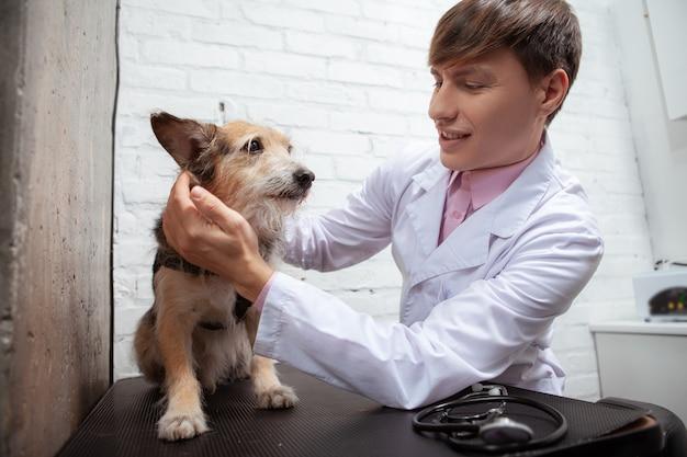 Cão de rua fofinho, sem raça definida, examinado por veterinário profissional na clínica