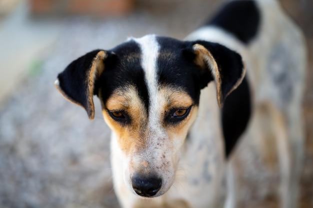 Cão de rua na ilha de madagascar