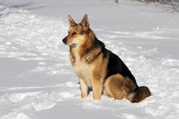 Cão de rua vermelha no inverno na rua. sentado na neve