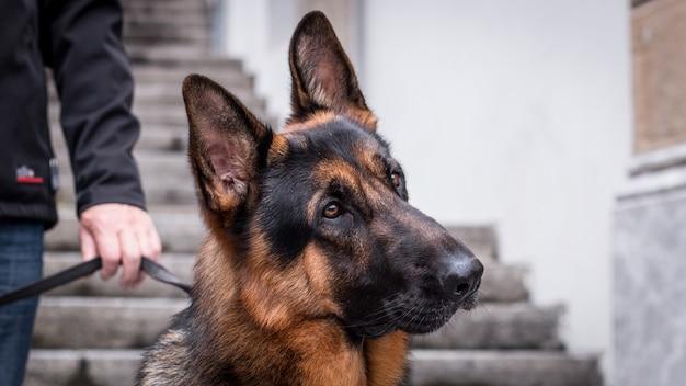 Cão de segurança com seu treinador