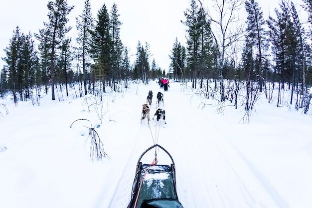 Cão de trenó com huskies na bela paisagem