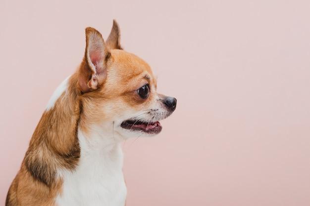 Cão de vista lateral com a boca aberta, olhando para longe