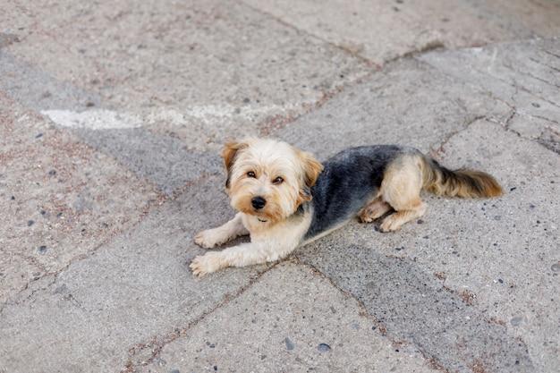 Cão deitado na estrada de cimento