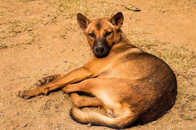 Cão deitado no chão