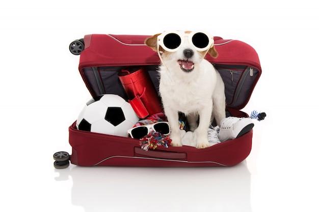 Cão dentro de uma mala de via indo nas férias de verão que desgastam óculos de sol.