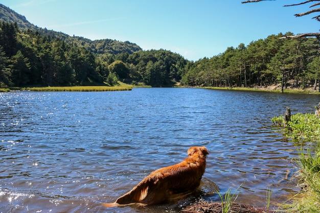 Cão dentro do lago bassa de oles.