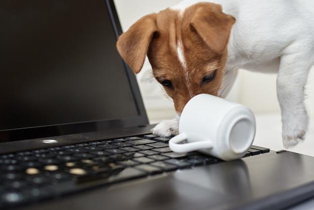 Cão derramado café no teclado do computador portátil