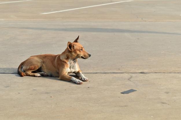 Cão desabrigado sozinho no estacionamento na cidade