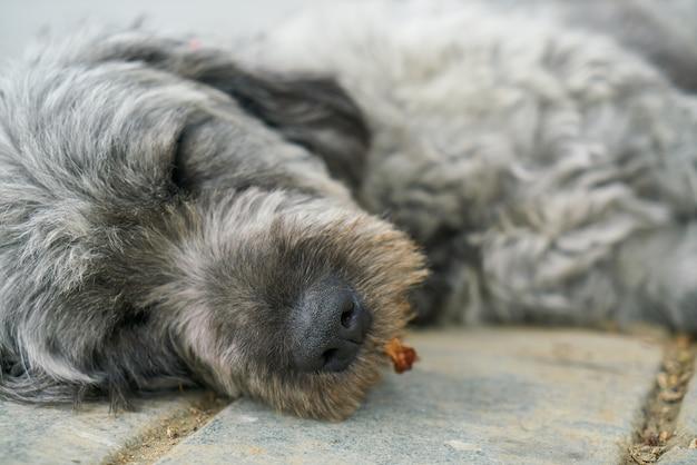 Cão do sono sobre