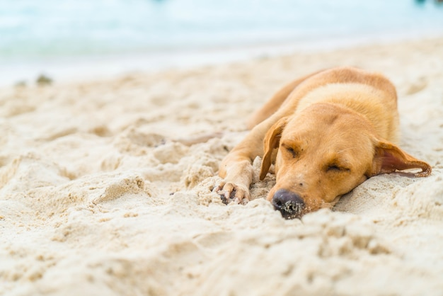 Cão dormindo na praia