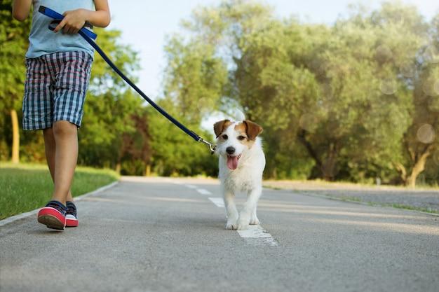 Cão e criança andando no parque. conceito de obediência e amizade.