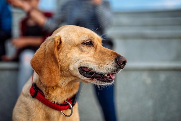 Cão e família desfrutando ao ar livre