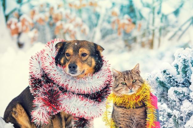 Cão e gato com enfeites de natal sentados juntos ao ar livre em um bosque nevado perto de um pinheiro. cena de natal