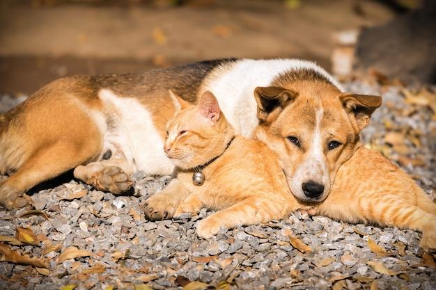 Cão e gato deitado juntos