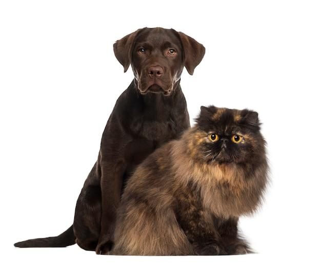 Cão e gato sentados isolados no branco