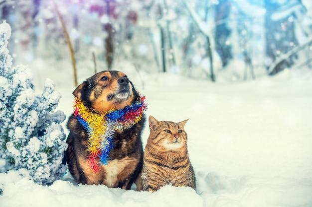 Cão e gato sentados juntos ao ar livre no bosque nevado perto do abeto. conceito de natal