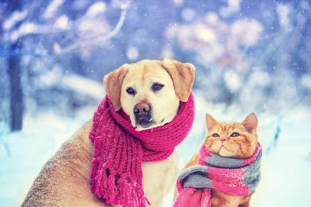 Cão e gato usando cachecol de malha sentados juntos ao ar livre na neve no inverno