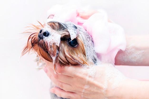 Cão é lavado no salão de animais.