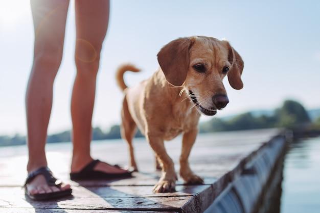 Cão e menina em pé na doca