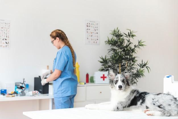 Cão e veterinário feminino na clínica veterinária