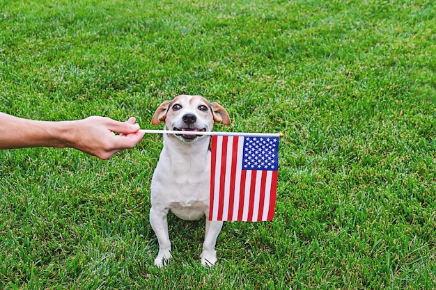 Cão em óculos de sol de estrelas e listras com bandeira americana
