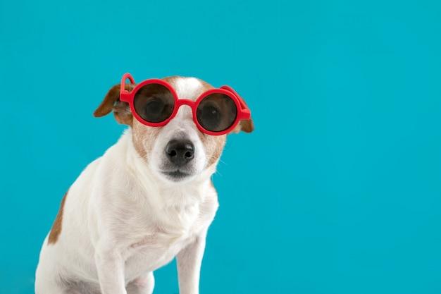 Cão em óculos de sol vermelhos